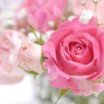 母の日はバラとカーネーションのどちら?バラの色や花言葉のご紹介