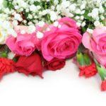 母の日に贈る花の種類とは カーネーションやバラやアジサイなど